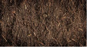 Compost manure in Kenya