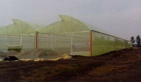 Commercial greenhouses in Kitengela